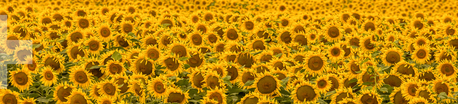 Ameropa Fertilizers Food Feed Danube Agriculture Sustainability Sunflowers